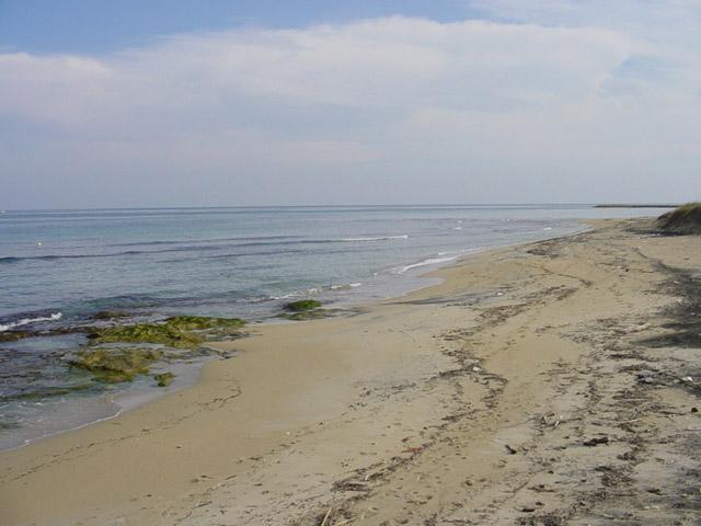 La costa di Torre Specchia, quasi tutta bassa, e' formata da lingue rocciose, piccole insenature e isolati scogli che affiorano a poca distanza dalla riva. Questi scogli, formati da un calcare bianco e friabile, sono ricoperti da una particolare vege
