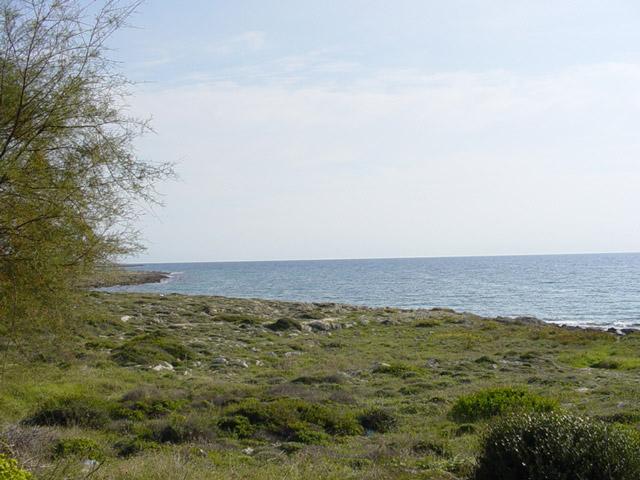 Torre Suda immersa nella macchia mediterranea che si estende quasi fino alla costa, presentando una natura selvaggia ed ancora incontaminata.