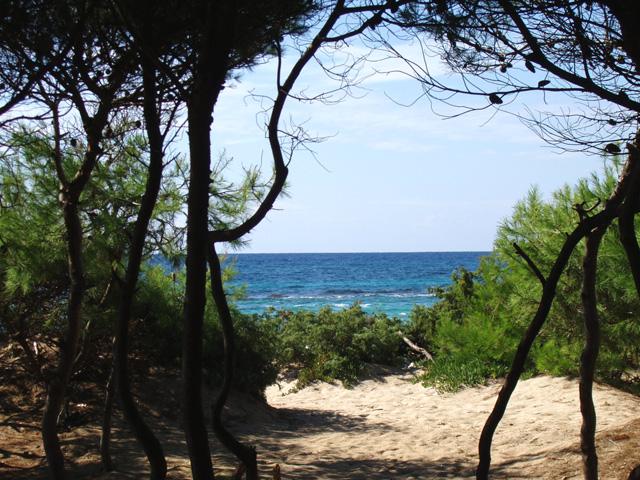 Rivabella e' baganata dal un mare cristallino, presenta una costa prevalentemente sabbiosa bianca e fina, che si estende per diverse centinaia di metri, costeggiata da una fitta pineta.