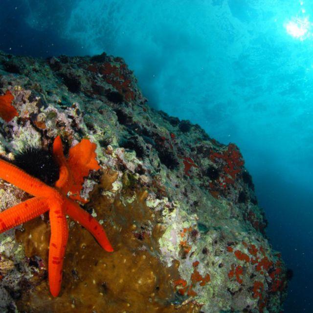 Il fondale cristallino offre opportunita' di interessanti escursioni agli amanti della pesca e a chi piacciono le profondita' del mare