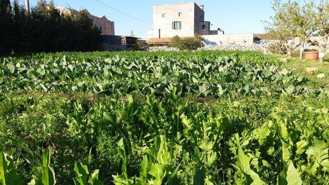 I campi per la produzione di ortaggi e verdure
