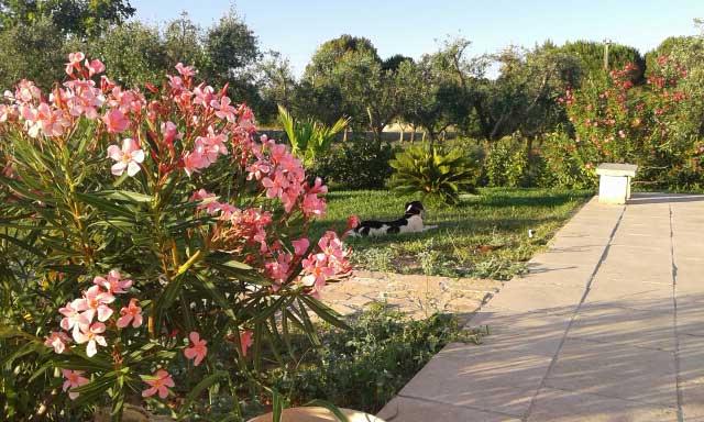 viali fioriti a casa vacanza Messapia