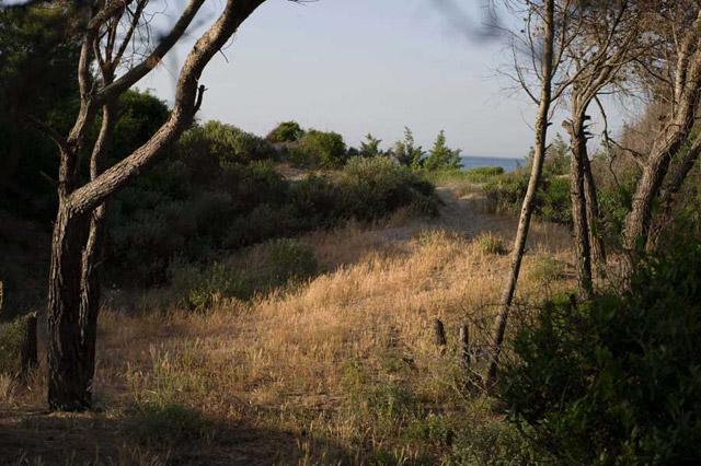 Stradina, creata nella pineta, che conduce al mare