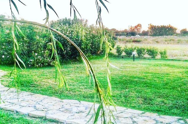 la campagna e il giardino circostante la casa vacanza