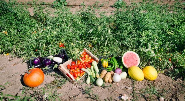 i prodotti dell'azienda agricola