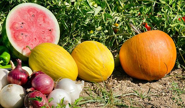 frutti e ortaggi vengono prodotti nei campi attigui