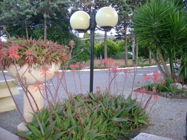 giardino e verde