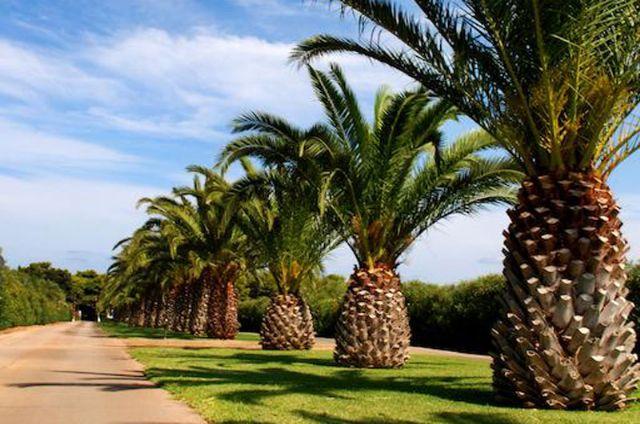 Villaggio residence scoglio degli achei a carovigno ostuni for Villaggio ostuni