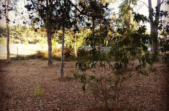 Il boschetto di Donna Carlotta sito a pochi km da Otranto