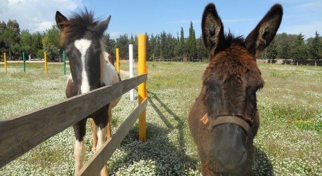 il recinto con i cavalli