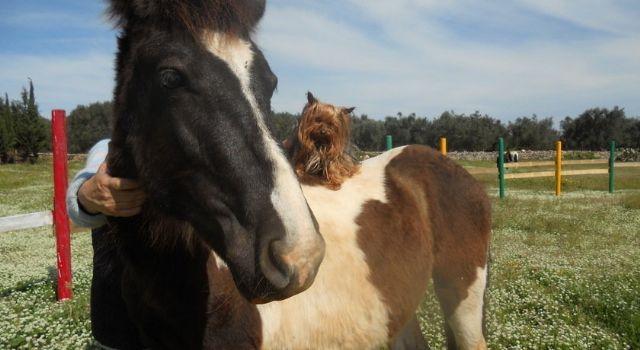 i tanti cavalli presenti in agriturismo