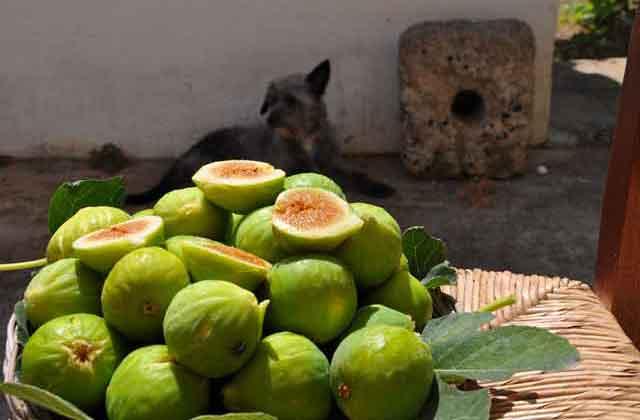 i prodotti della terra a Masseria Uccio