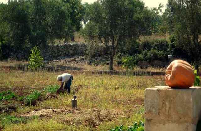 il lavoro nei campi di questa masseria situata a Tricase