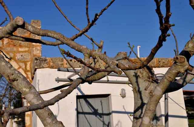 L'architettura dell'insediamento di Masseria Uccio